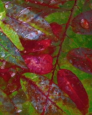 Photograph - Wet Red Leaves - Waterdrops Series by Patricia Strand