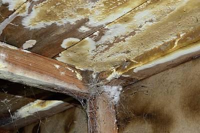 Cellar Photograph - Wet Rot by Cordelia Molloy