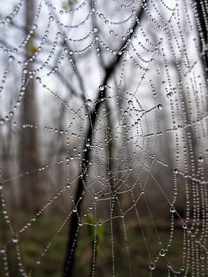 National Park Service Photograph - Wet Spider Web by Francis Sullivan