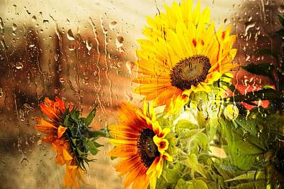 Photograph - Wet Sunflowers by Michael Hope