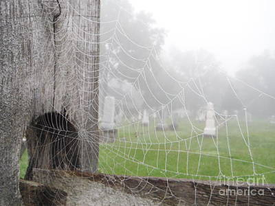 Web Of Life Photograph - Wet Web Of Life by Paddy Shaffer