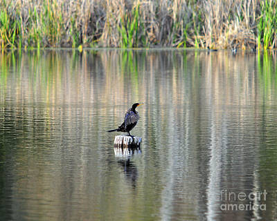 Wet Wings Print by Al Powell Photography USA