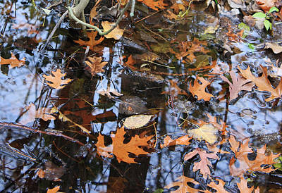 Wetland Reflections 12 Art Print by Mary Bedy