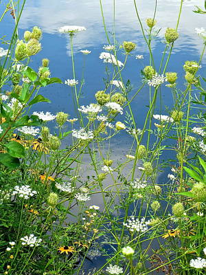 Photograph - Wetland Wildflowers by Rita Mueller