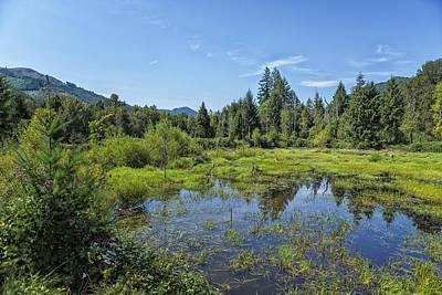 Little Mosters - Wetlands - Blue River Oregon by Belinda Greb