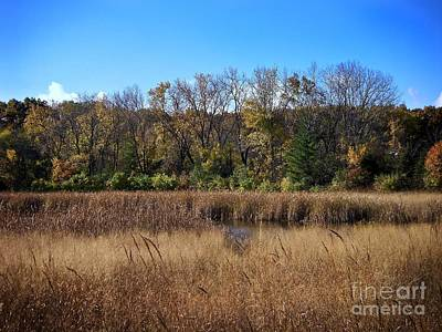 Frank J Casella Royalty-Free and Rights-Managed Images - Wetlands in the Preserve - Autumn by Frank J Casella