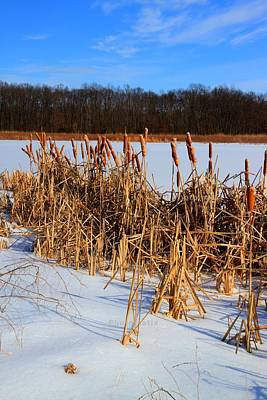 Photograph - Wetlands In Winter by Haren Images- Kriss Haren