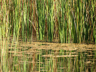 Wetlands Art Print by Laurel Powell