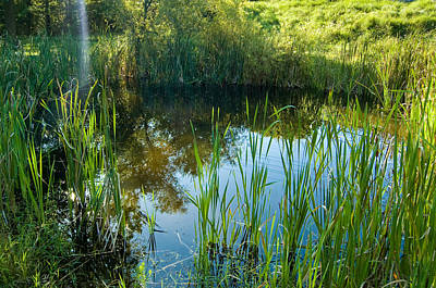 Photograph - Wetlands Poond by Cara Moulds