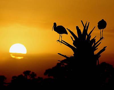 Photograph - Wetlands Sunset by Ira Runyan