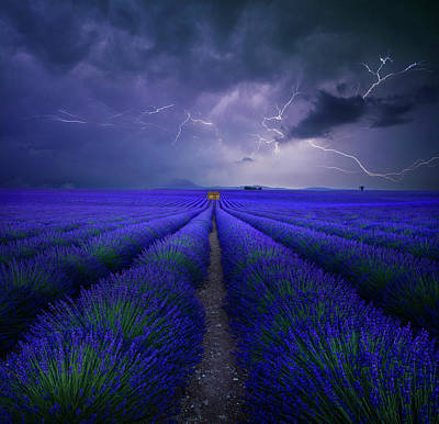 Bolt Photograph - Wetter Im Lavendelfeld by Franz Schumacher