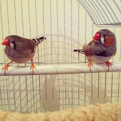 Finch Wall Art - Photograph - We've Had A Fight #domestic #fight by Lizzie Leslie