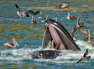 Photograph - Whale Almost Eating A Pelican by Alice Cahill
