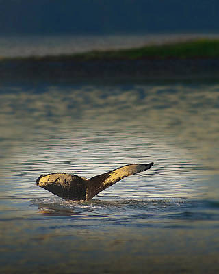 Photograph - Whale At Dusk by Don Wolf
