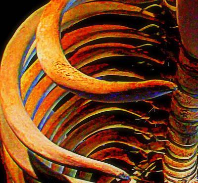 Whale Bone Art Print by Randall Weidner