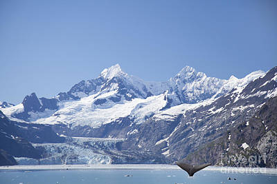Photograph - whale in Glacier Bay Park Alaska by Nick Jene