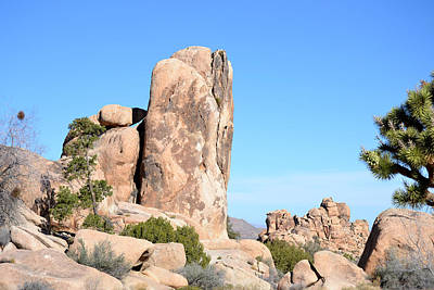 Photograph - Whale Rock - Joshua Tree National Monument by rd Erickson
