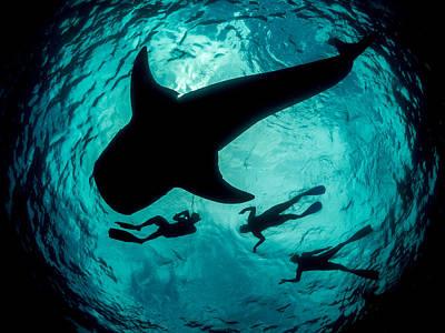 Whale Shark Silhouette Off Mexico Original by Simon Pierce
