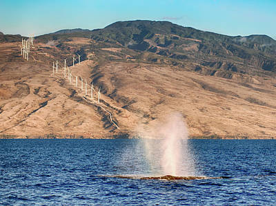 Photograph - Whale Spout by Trever Miller