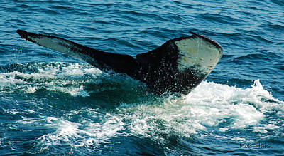 Photograph - Whale Tail 2 by Ron Haist