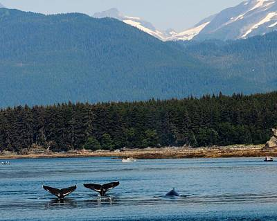 Photograph - Whales In Alaska by Ken Arcia