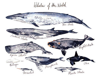 Chart Painting - Whales Of The World by Laura Row