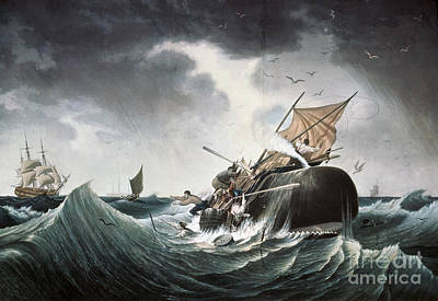 Aodng Painting - Whaling 1835 by Granger