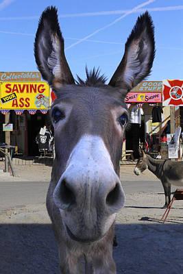 Donkey Photograph - What . . . No Carrots by Mike McGlothlen
