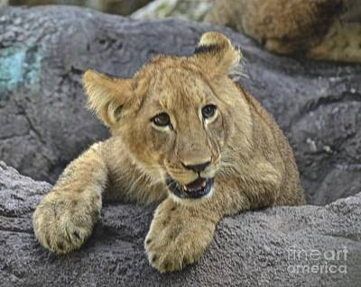 Photograph - What A Cutie by Carol  Bradley