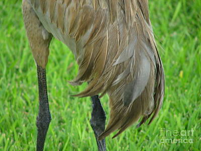 Photograph - What A Drumstick by Lew Davis