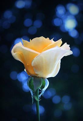 Flower Photograph - What A Feeling by The Art Of Marilyn Ridoutt-Greene
