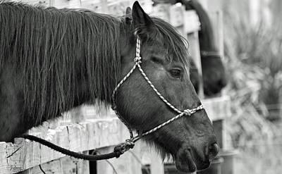 What A Horse Art Print