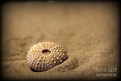 Photograph - What Becomes Sand by C Ray  Roth