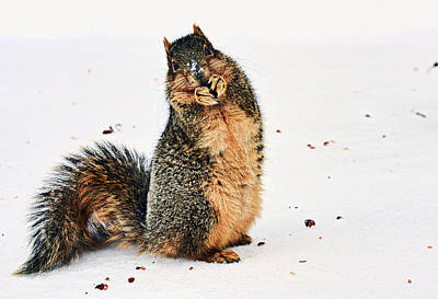 Fox Squirrel Photograph - What Do You Mean I Made A Mess? by Marcia Colelli