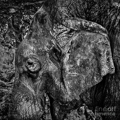 Photograph - What Elephant? by Richard Mason