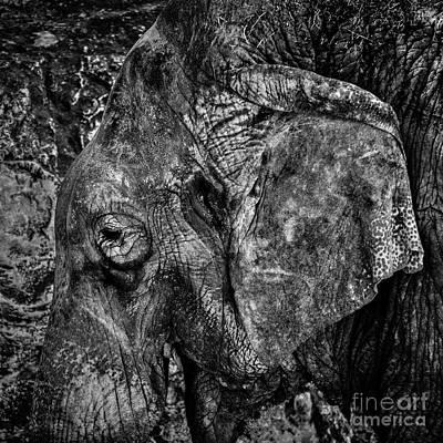 Photograph - What Elephant? by Richard Mason