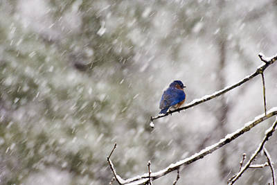 Photograph - What Happened To Spring? by Robert Camp