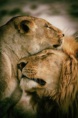 Lioness Wall Art - Photograph - What Is Love by Mohammed Alnaser