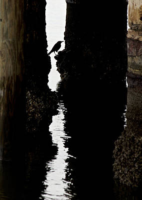Photograph - What Lies Beneath by Penny Meyers