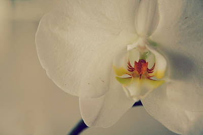 White Orchid Photograph - What Love Felt Like by Laurie Search