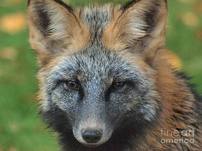 What The Fox Said Art Print