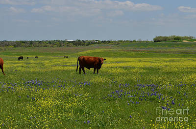 Pastures Photograph - What You Looking At by Hilton Barlow