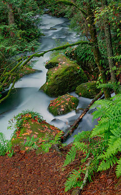 Art Print featuring the photograph Whatcom Falls 1 by Jacqui Boonstra