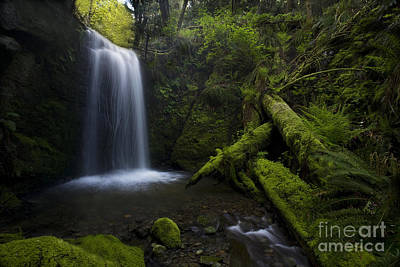 Lush Photograph - Whatcom Falls Serenity by Mike Reid
