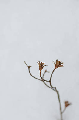 Photograph - What's Left In Winter by Beth Sawickie