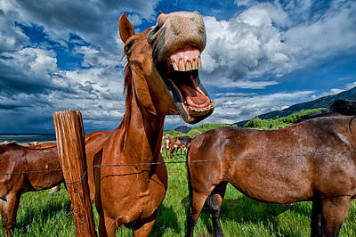 Animals Photos - Whats So Funny by Cat Connor