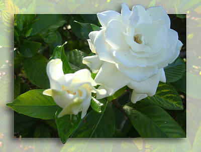 Photograph - Whats So Special About White Flowers by Ginny Schmidt