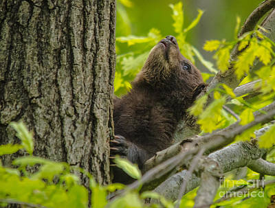 Photograph - What's Up There by Cheryl Baxter