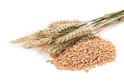 Ear Of Corn Photograph - Wheat And Corn by Wladimir Bulgar