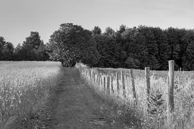 Farnham Photograph - Wheat Field And Lane Through A Meadow by David Chapman